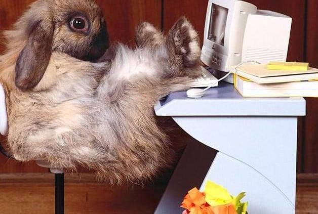 Office Rabbit